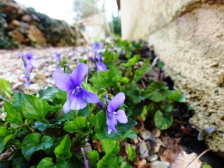 violette tarn nature