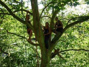 grimpe arbres mont-roc